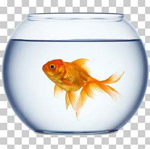Goldfish Stock Photography Aquarium PNG