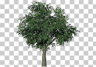 Tree 3D Computer Graphics Wavefront .obj File Animation 3D Modeling PNG
