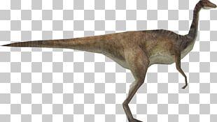 Velociraptor Jurassic Park: Operation Genesis Gallimimus Edmontosaurus Brachiosaurus PNG