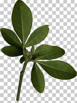 Leaf Plant Leaves PNG