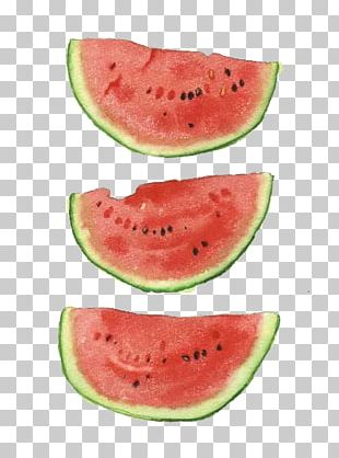 Watermelon Watercolor Painting Art Illustration PNG