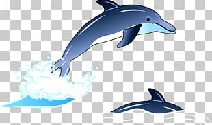 Common Bottlenose Dolphin Wholphin Tucuxi Rough-toothed Dolphin Dolphin PNG