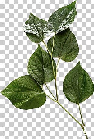 Leaf Price Vegetable Fruit Herb PNG