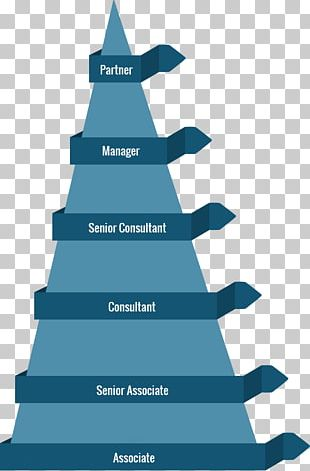 Christmas Tree Career Fir Tree Structure PNG