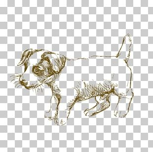 Jack Russell Terrier Siberian Husky Puppy Drawing PNG