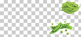 Leaf Vegetable Alternative Health Services Snap Pea Snow Pea PNG