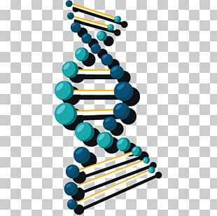 DNA Nucleic Acid Double Helix Gene Science PNG
