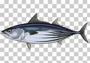 Squid Atlantic Bonito Skipjack Tuna Albacore Mahi-mahi PNG