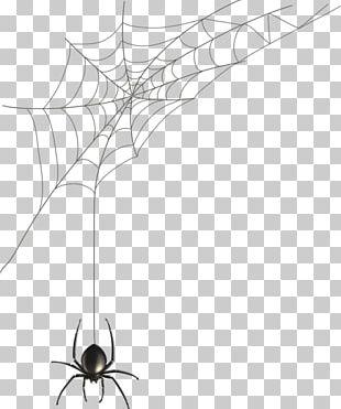 Spider Web Black House Spider Illustration PNG