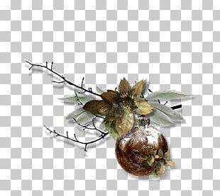 Bird Raster Graphics PNG