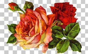 Rose Vintage Clothing Scrapbooking PNG