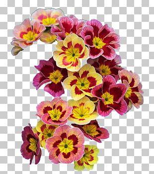Flower Primrose Spring Wreath Garland PNG