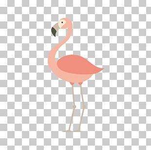 Flamingos Bird Parrot Euclidean PNG