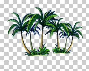 Arecaceae Tree Computer File PNG