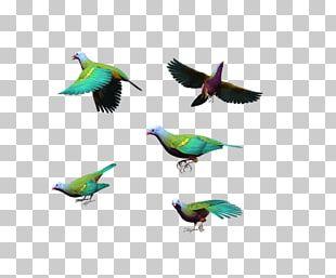 Bird Columbidae Flight Blue PNG