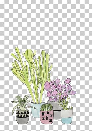 Cactaceae Succulent Plant Header T-shirt PNG