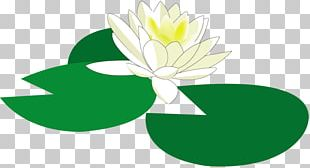 Water Lily Flower Floral Design PNG