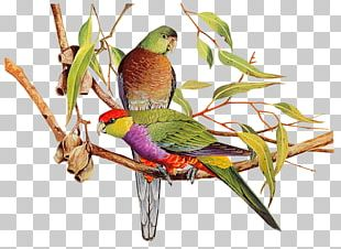 Bird Watercolor Painting Parrot Art PNG