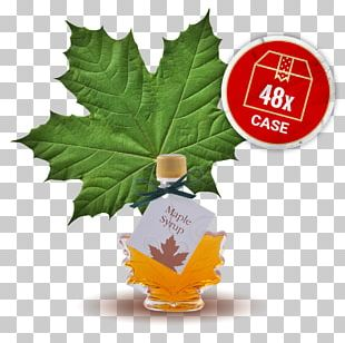 Maple Syrup Maple Leaf Leaf Vegetable PNG