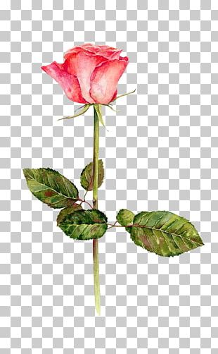 Festival Of The Flowers Watercolor: Flowers Garden Roses Watercolor Painting Drawing PNG