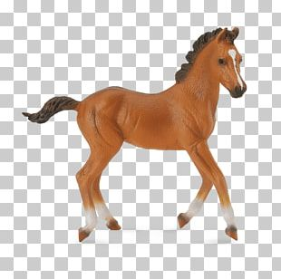 American Quarter Horse Foal American Paint Horse Clydesdale Horse Mare PNG