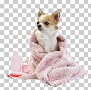 Dog Grooming Puppy Pet Veterinarian PNG