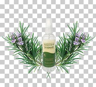 Rosemary Herbal Distillate Cosmetics Essential Oil PNG