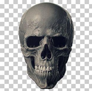 Animal Skulls Bone Human Skeleton PNG