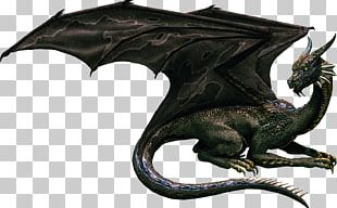 Loved By The Dragon Collection PNG