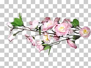 Floral Design Cherry Blossom PNG