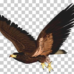Hawk Bird Eagle PNG