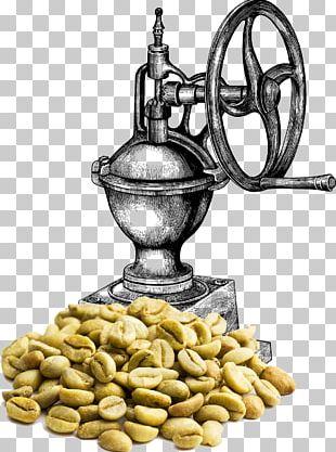 Coffee Bean Green Coffee Extract Kaffa Province Coffee Roasting PNG