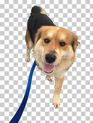Dog Breed Pet Sitting Puppy Companion Dog PNG