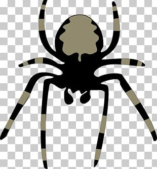 Spider Free Content PNG