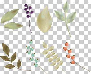 Petal Leaf Flower Illustration PNG