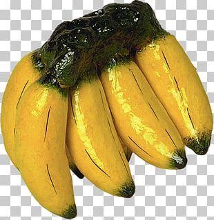 Cooking Banana Saba Banana Banana Bread Fritter PNG