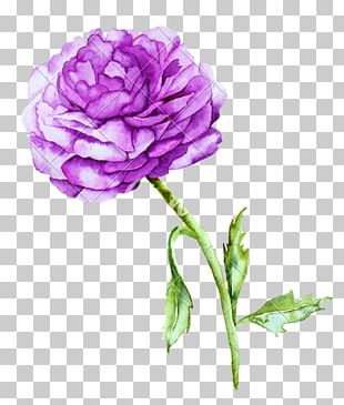 Violet Peony Watercolor Painting Photography PNG