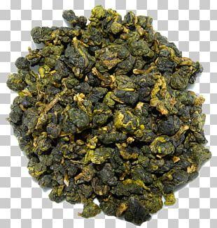 Oolong Herbal Tea Tea Plant GABA Tea PNG
