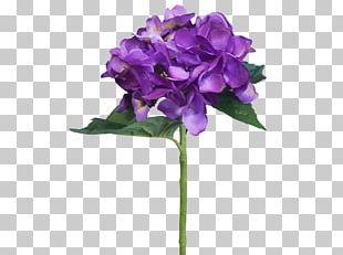 Hydrangea Cut Flowers Violet Petal PNG