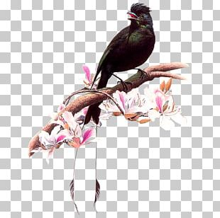 Bird Artist Painting Drawing PNG