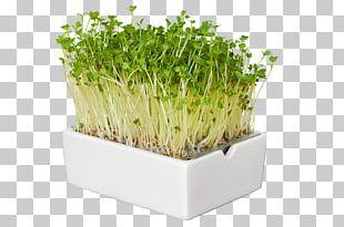 Trendy Food Herb Superfood Microgreen PNG