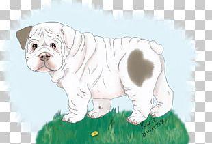 Toy Bulldog Olde English Bulldogge Dorset Olde Tyme Bulldogge Puppy Dog Breed PNG