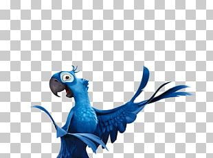 Rio De Janeiro Jewel Parrot Blu Bird PNG