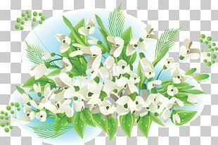 Snowdrop Flower Spring Information PNG