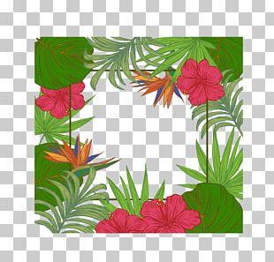 Leaf Arecaceae Tree PNG