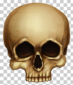 Skull Calavera Halloween Skeleton PNG