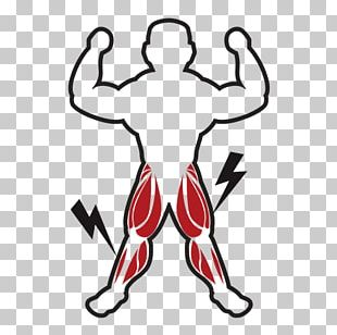 Muscle Tissue Myocyte Computer Icons PNG
