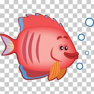 Marine Biology Marine Mammal PNG