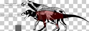Tyrannosaurus Dinosaur Size Allosaurus Acrocanthosaurus Nanotyrannus PNG