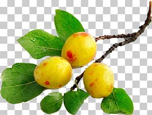 Auglis Fruit Tree Flower PNG